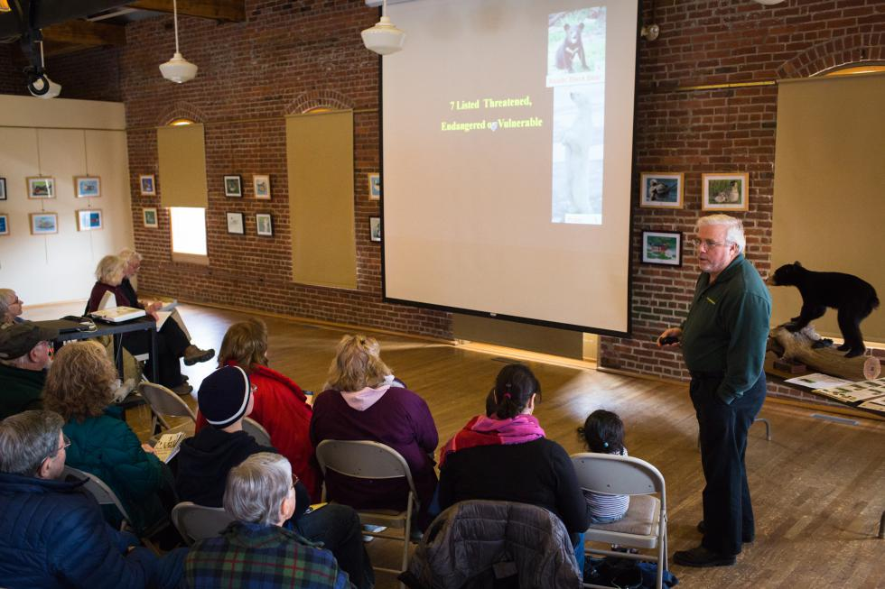 Ralph Taylor, the MassWildlife Connecticut Valley District Supervisor, gives a presentation on black bears in the area at the Discovery Center in Turners Falls, Saturday, January 23. Recorder Staff/Matt Burkhartt - Matt Burkhartt |
