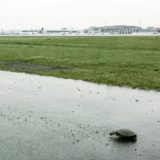 Kennedy airport takeoffs disrupted by turtles
