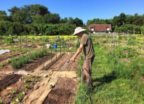 A plot of your own at Grow Food Northampton
