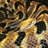 Editorial:Don't let snake plan rattle you