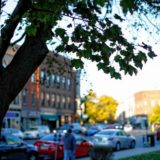 Columnist Lilly Lombard:Celebrating shade trees in Northampton