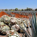 Earth Talk: Alcoholic beverages makers doing their part for the planet