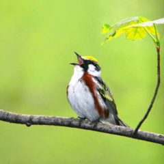 Earth Matters: The 'dawn bout': Why do the birds wake me up so early?