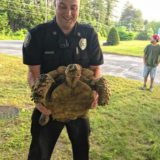 Runaway tortoise found by Athol police, returned to owner