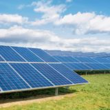 Down to Earth: A choice: forests or solar panels?