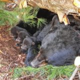 Living responsibly in bear country
