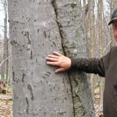 Earth Matters: Of beech bark, bumps and bears