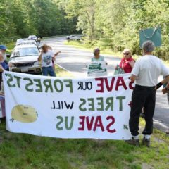 Four Wendell State Forest protesters arrested