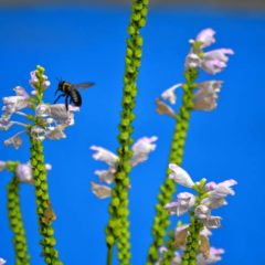 Talk to discuss fall gardening tips to help bees, butterflies survive winter