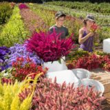 Flower Farming in the Valley