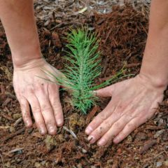 Earth Matters: Can trees help us with climate change?