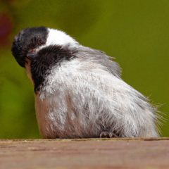 What do birds need to thrive?