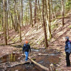 Conservation nonprofit acquires land at base of Mount Toby in Sunderland