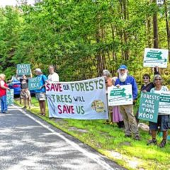 Judge hears arguments on motion to dismiss Wendell State Forest case, sets deadline for comments