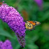 Regional pollinator project expected to be finished by end of June